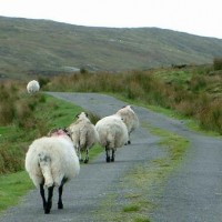The Hills and Dales of Ireland—Saint Paddy's Day Profile From the Archives