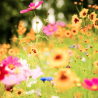 Profile: The Language of Flowers