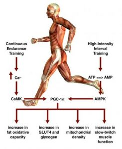 high intensity interval training vs endurance